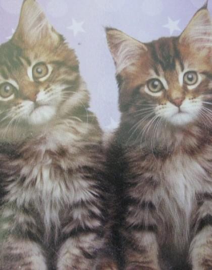 2 részes pamut ágyneműgarnitúra (Macskák) (140×200 cm)